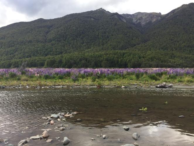Fjordland meadows