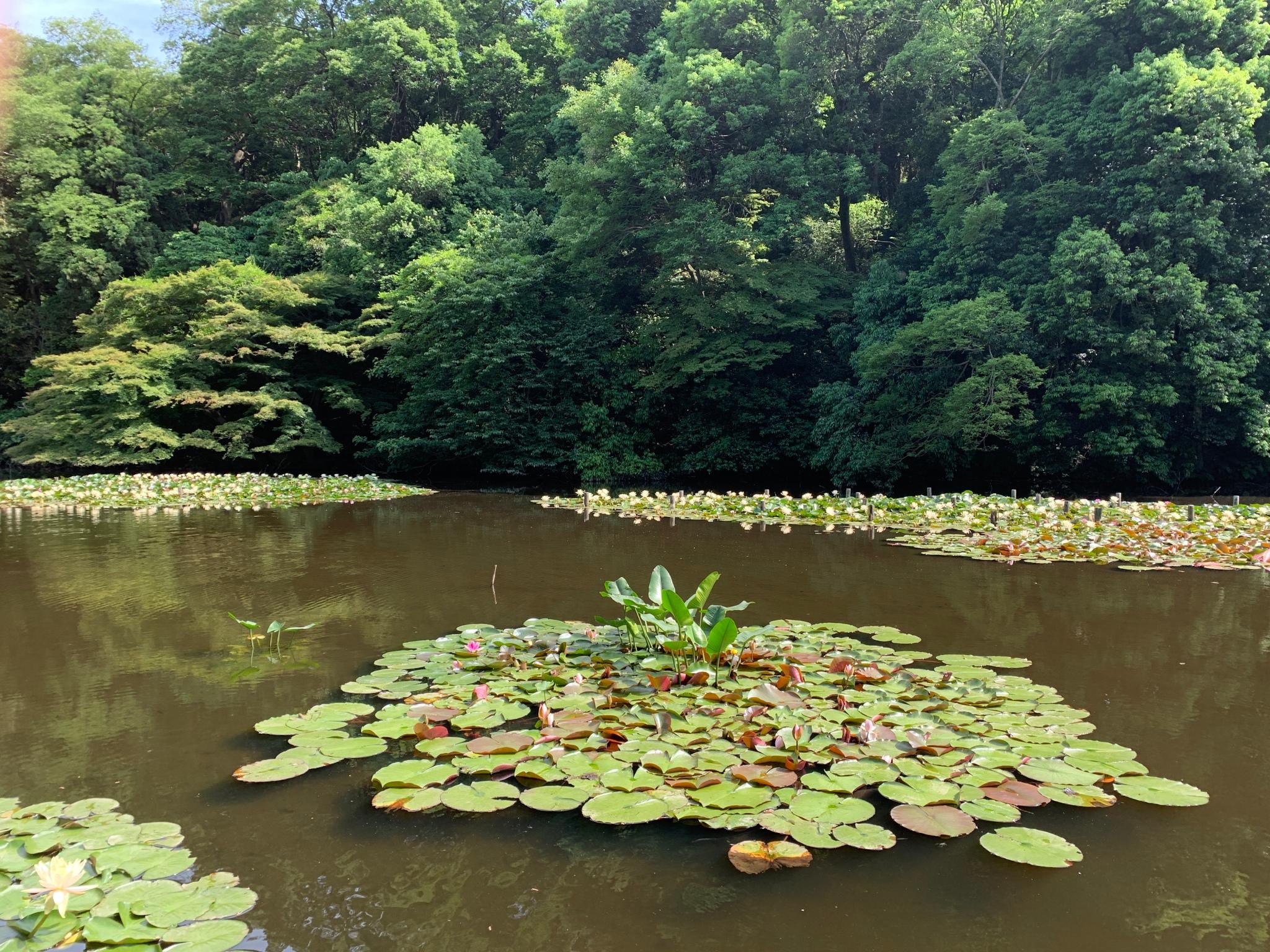 Meiji-jingu Gyoen