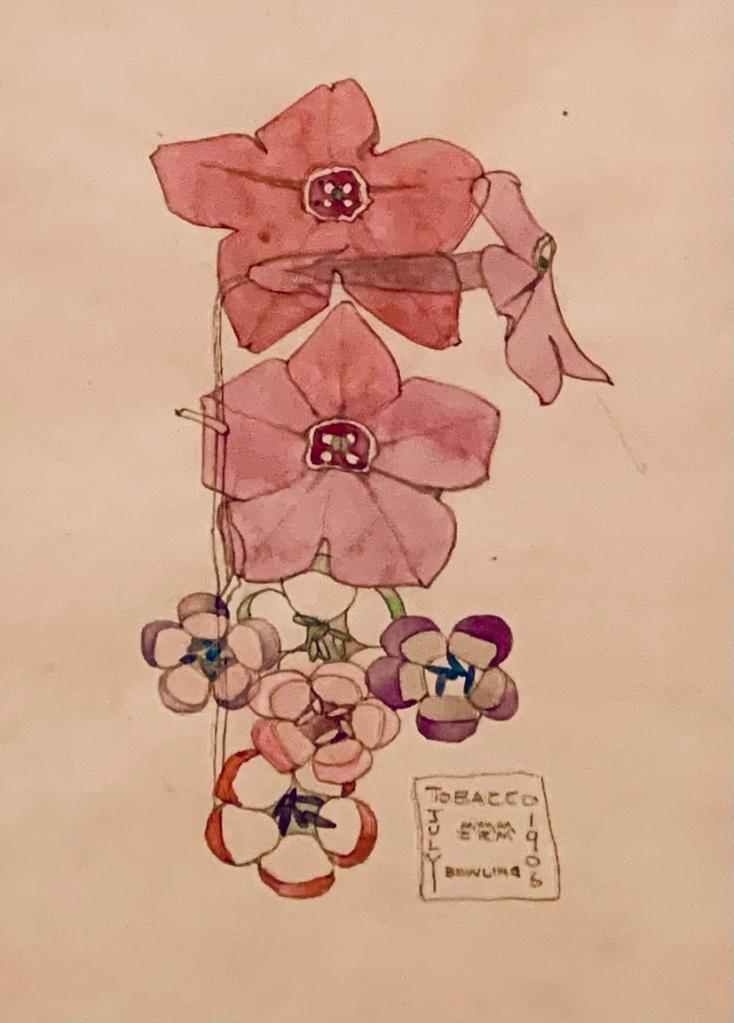 Tobacco Flowers by Charles Rennie Mackintosh, 1906